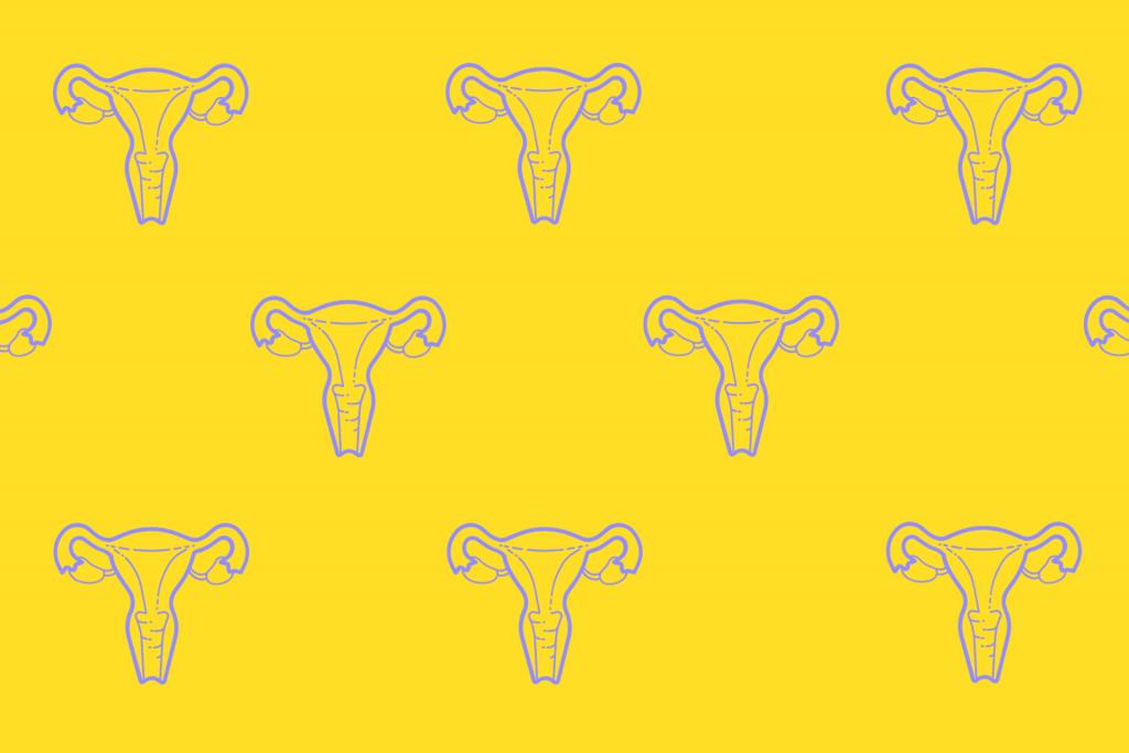 ženské, vnútro, vonkajšok, pohlavné orgány, vulva, vagína, klitoris, maternica, vaječníky